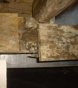Extensive basement rot found in St. Charles by Woods Basement Systems, Inc.