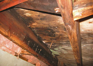 Extensive crawl space rot damage growing in Centralia