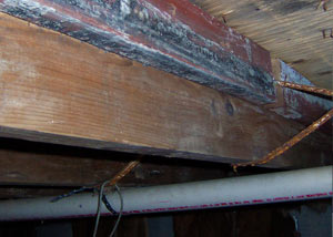 Rotting, decaying wood from mold damage in Mount Vernon